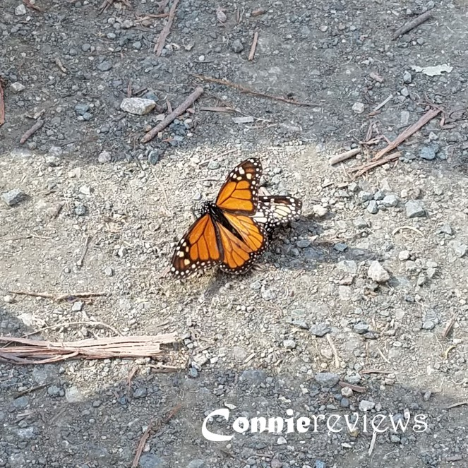 Butterfly Grove Pismo Beach